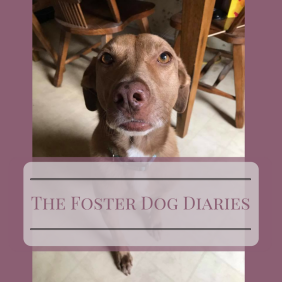 The Foster Dog Diaries